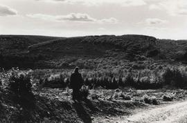 Photograph of Magdalena Jetelová looking across the landscape from the location of Place/ Giant's Chair