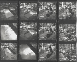 Contact sheet with photographs of Dead Wood/ Bois Mort and Carole Drake