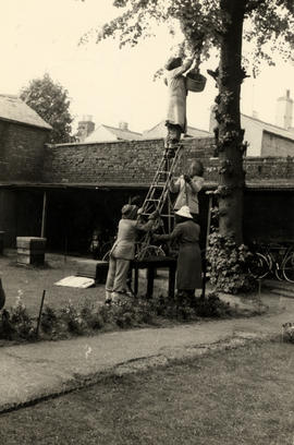 Photograph of beekeeping at The Priory