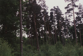 Photograph of section of sculpture Grove of Silence