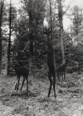 Photograph of three deer, part of As There Is No Hunting Tomorrow
