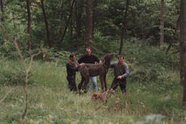 Various photographs of three men and a dog during the installation of sculpture Deer/ Searcher